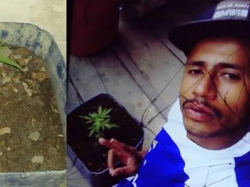 Jovem que tinha plantado um pé de maconha em casa é preso em Itamaraju