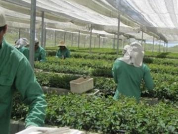 Veracel Celulose divulga edital para contratação de Viveirista Florestal