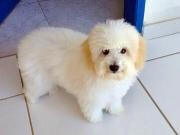 Família oferece recompensa por cadela perdida em Itagimirim