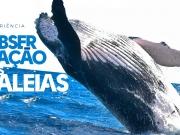 Observação de baleias é experiência inesquecível para hóspedes do La Torre.