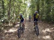 Parque Nacional do Pau Brasil (BA) será aberto à visitação no dia 28 de outubro