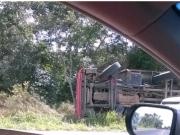 Caminhão tomba com 90 porcos na BR-367 em Pindorama
