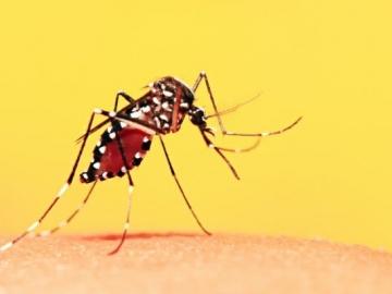 Surto de febre amarela no Brasil é destacado em informe internacional