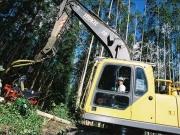 Veracel divulga edital de seleção para treinamento de Operadores de Máquinas Florestais