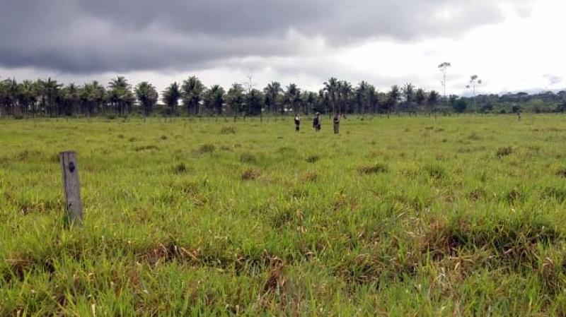 Corpo foi localizado em uma área rural. (Radar64)