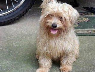 Cão atende pelo nome de Álvin. (Divulgação)