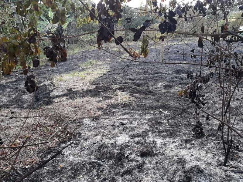 Vegetação foi devastada pelas chamas. (aGazeta Bahia)