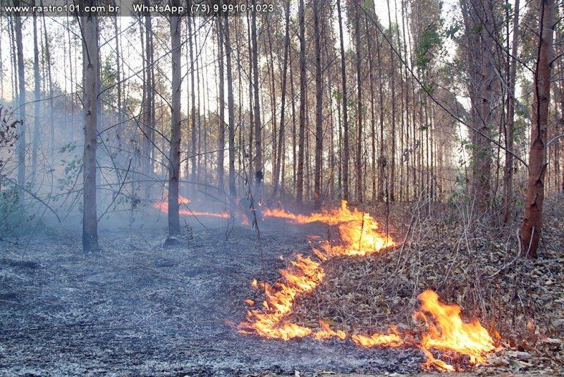 Incêndio atingiu uma grande área de plantação de eucaliptos na região (Rastro101)