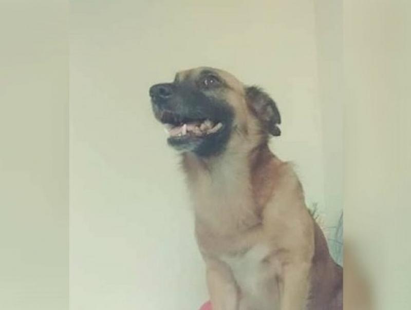 Cachorro foi morto a tiros na Bahia. (Reprodução/Facebook)