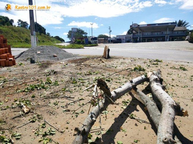 Caminhão perdeu o freio em um posto de combustíveis, desceu de ré e derrubou uma árvore. (Foto: Rastro101)