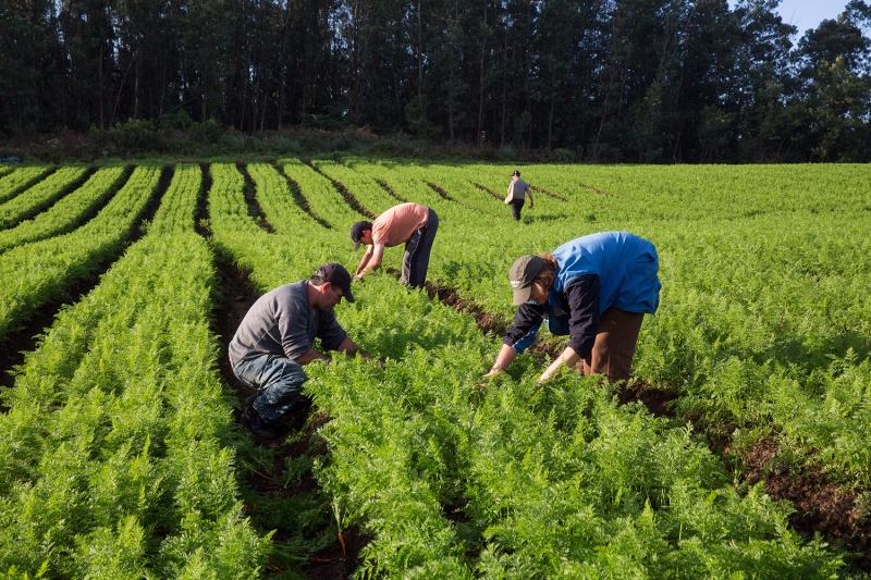 A ação inédita prevê a implantação de um projeto de apoio à agricultura familiar, com base no conceito de agroecologia, e envolve 252 famílias de agricultores familiares residentes no município de Eunápolis. (Imagem: Divulgação)