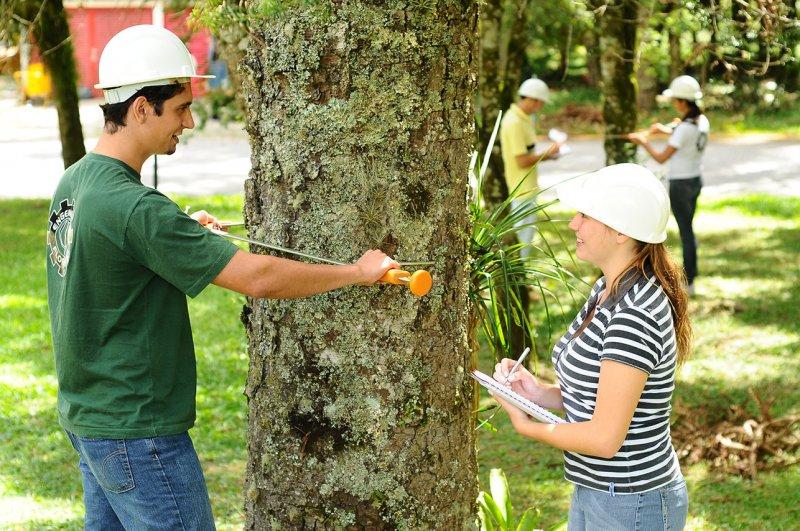 Veracel divulga edital para contratação de estagiário de Engenharia Florestal e Engenharia Ambiental (Divulgação)