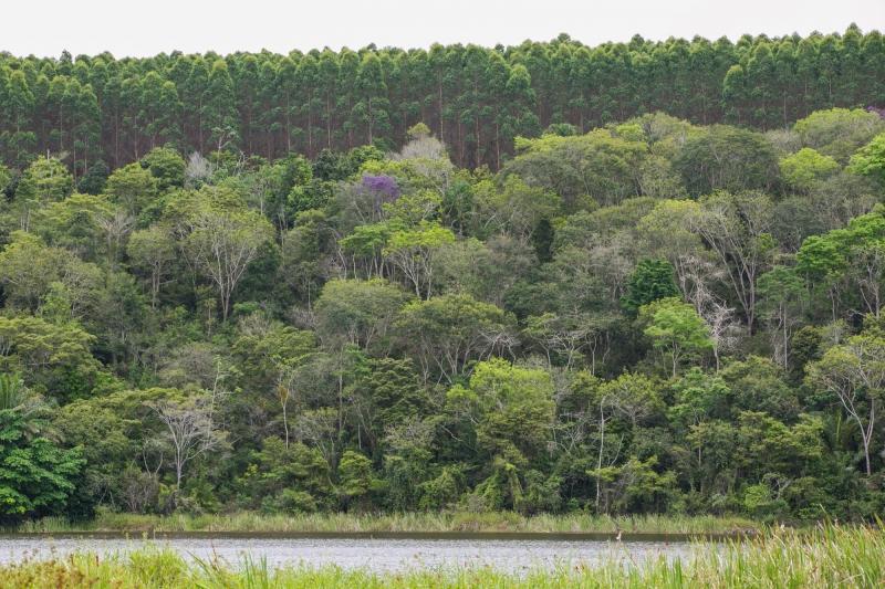 Em Eunápolis, a Veracel Celulose abriu a oportunidade para o ingresso de novos produtores no Programa Produtores Florestais. (Divulgação)
