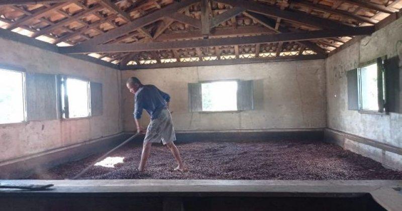 Foto da produção de cacau da Associação Unidos do Grande Rio. Imagem: Divulgação comunidade