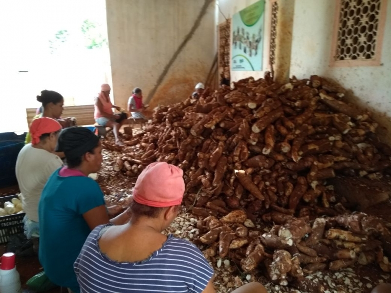 Agricultores comemoram uma super colheita. (Imagem: Divulgação)