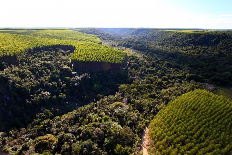empresa já reflorestou mais de seis mil hectares e conectou dezenas de milhares de fragmentos de floresta nativa na região, beneficiando a fauna e flora do sul da Bahia, onde se concentra uma boa parte da Mata Atlântica. (Divulgação)
