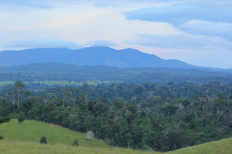 Veracel e Suzano se unem para realizar o maior monitoramento privado de fauna e flora do País. (ASCOM-Veracel)