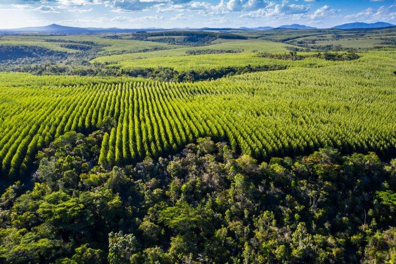 Empresa Veracel Celulose é referência na região (Divulgação)