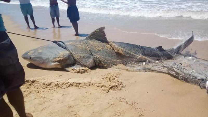 Animal tinha cerca de 140 kg. (Reprodução)