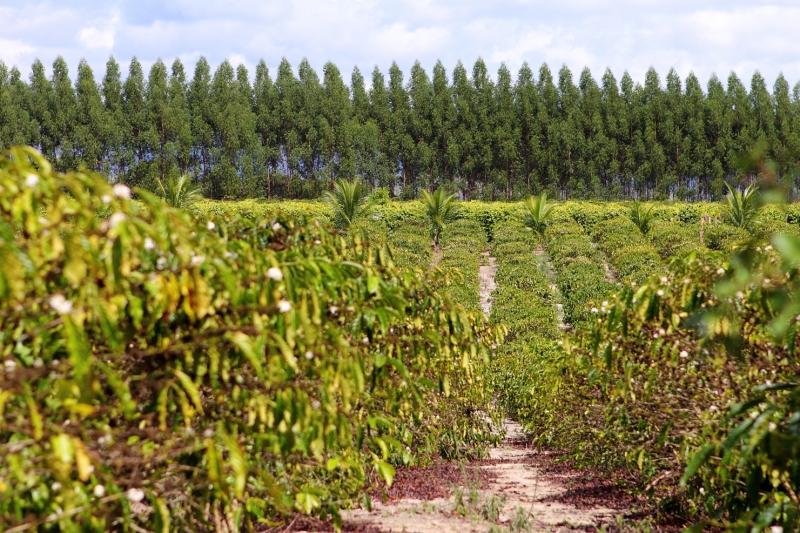 O Programa Produtor Florestal (PPF) da Veracel Celulose existe há 15 anos. (Divulgação)
