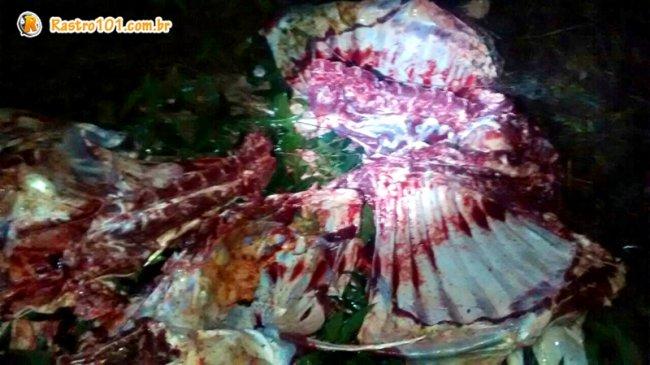 Boi estava sendo desossado no meio da mata em uma fazenda em Itapebi. (Foto: Divulgação/PM)