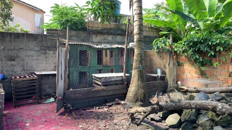 Rinha de galo fechada em Porto Seguro. (Reprodução/Radar64)