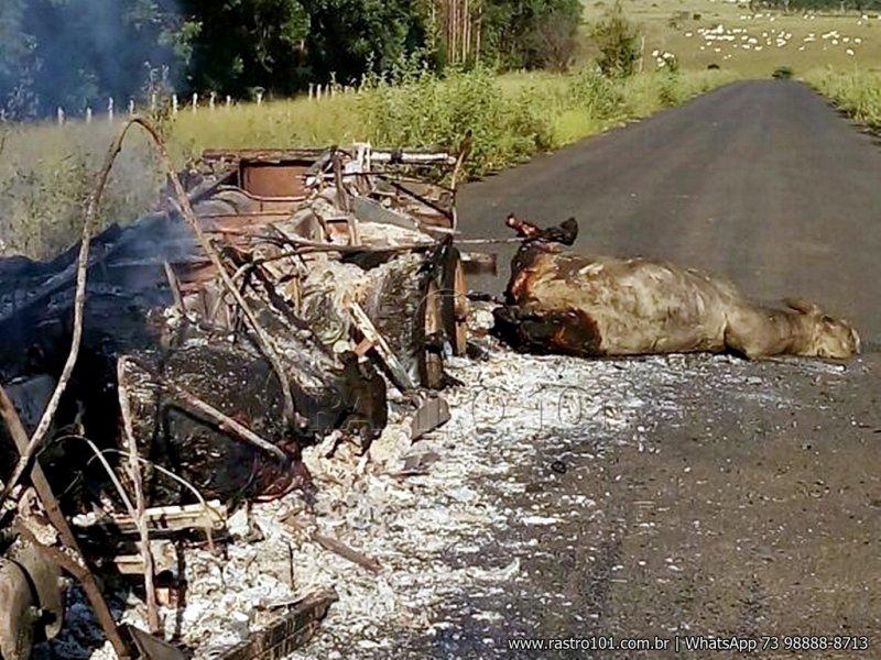 Caminhão carregado com bois pega fogo na BA-275. (Foto: Divulgação)