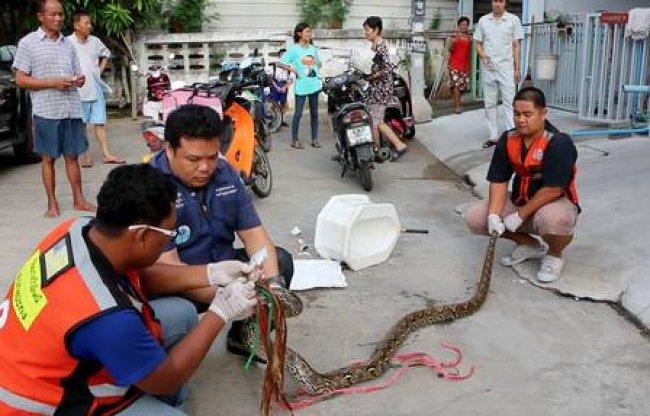 (Foto: BBTV CH7 Thailand / AP)
