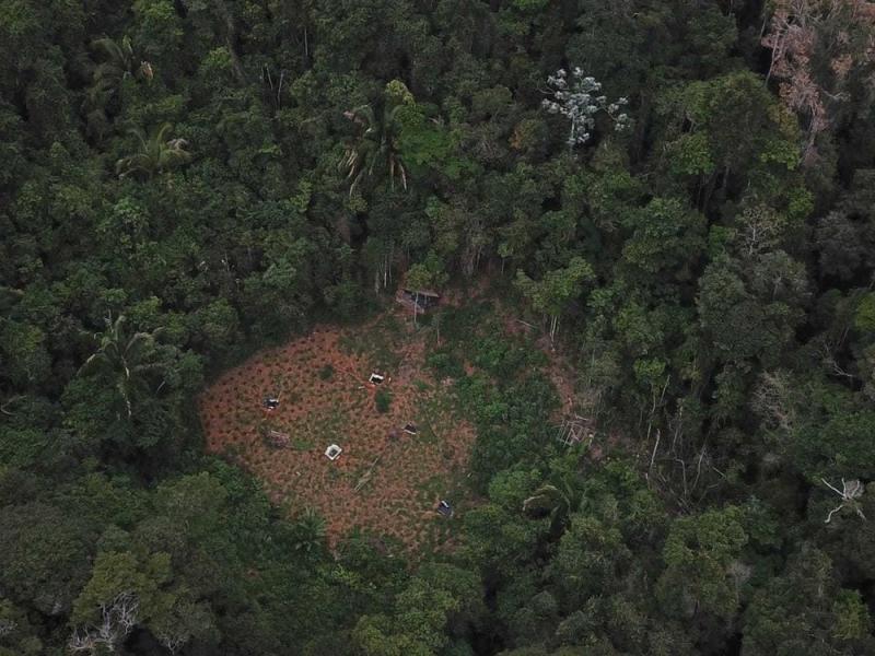 Um drone foi utilizado para localizar a plantação. (Divulgação: SSP-BA)