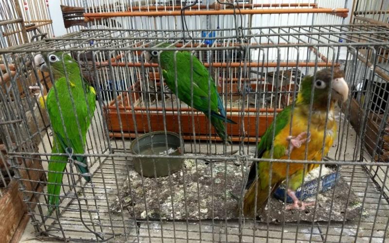 Foram apreendidos animais de várias espécies. (Foto: Divulgação/Inema)