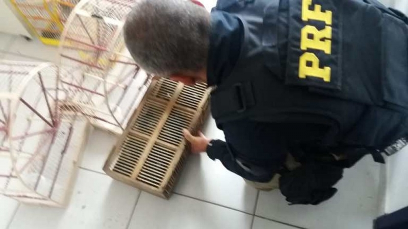 Animais estavam dentro de carro na BR-101. (Foto: Polícia Rodoviária Federal / Divulgação)