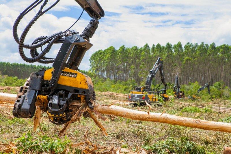 Edital de Seleção para Treinamento Gratuito de Operadores de Máquinas Florestais da Veracel (Divulgação)