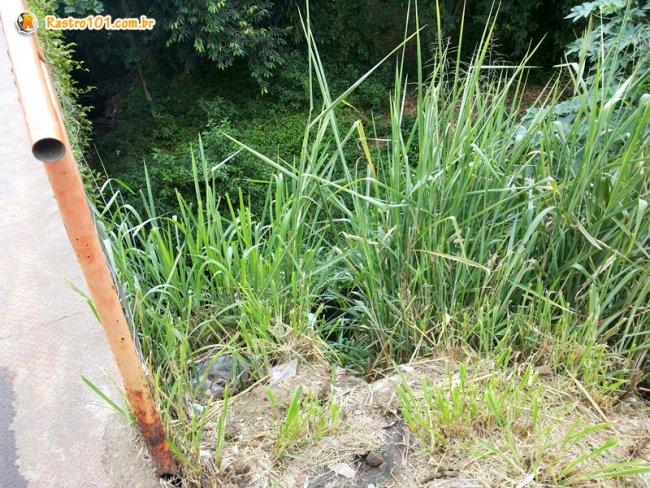 Lateral não possui proteção e o perigo de animais e crianças pequenas cair ali é grande. (Foto: Rastro101)