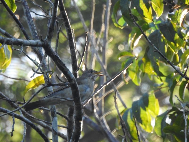 A imagem foi captada pelas lentes da analista ambiental da Veracel Celulose Priscilla Sales durante uma atividade de observação de aves feita durante o 2º Festival de Aves de Porto Seguro.