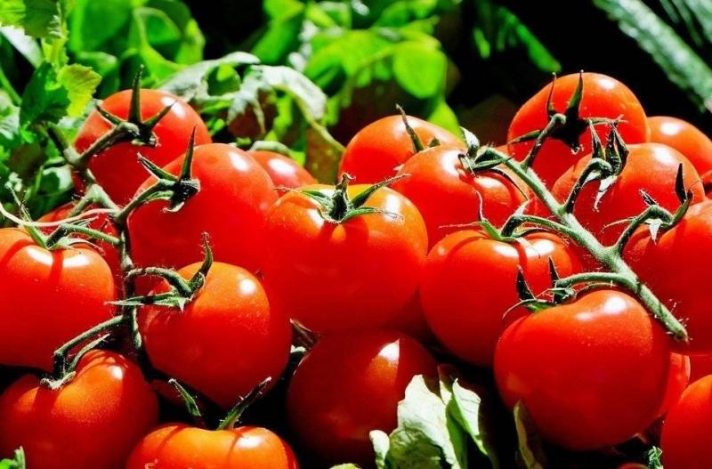 Conforme apontam os dados, a produção de tomates que foi de 230.800 toneladas em 2018, deve passar para 275.800 em 2019. (Reprodução)