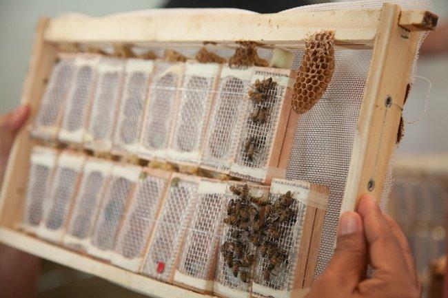 Expectativa da Veracel Celulose e da Ceplac é que a produtividade média nas colmeias passe dos atuais 35kg a 40kg de mel por ano para 70kg a 80kg anuais por colmeia. (Foto: Divulgação)