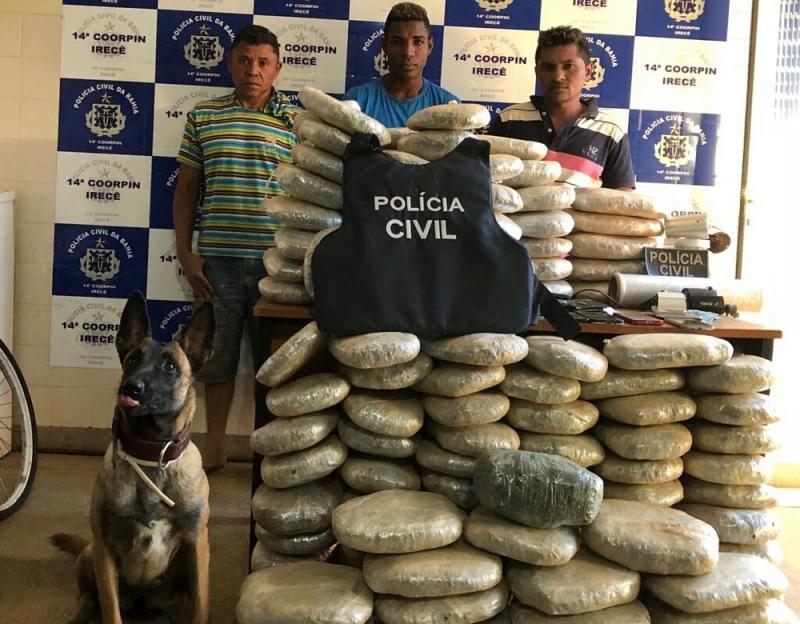 Cadela policial Singer encontrou os 132 kg de maconha enterrados no quintal. (Foto: Divulgação/SSP-BA)